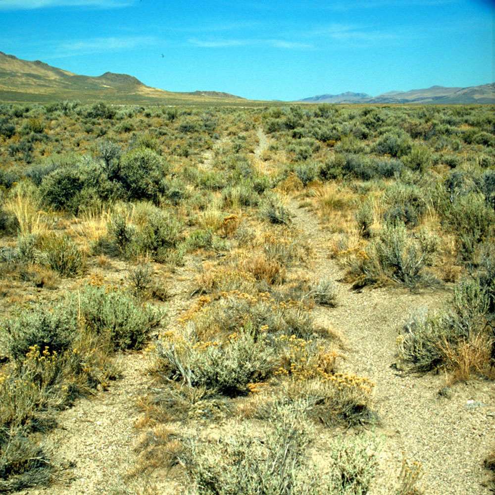 Wagon Wheel ruts near Wells, Nevada
