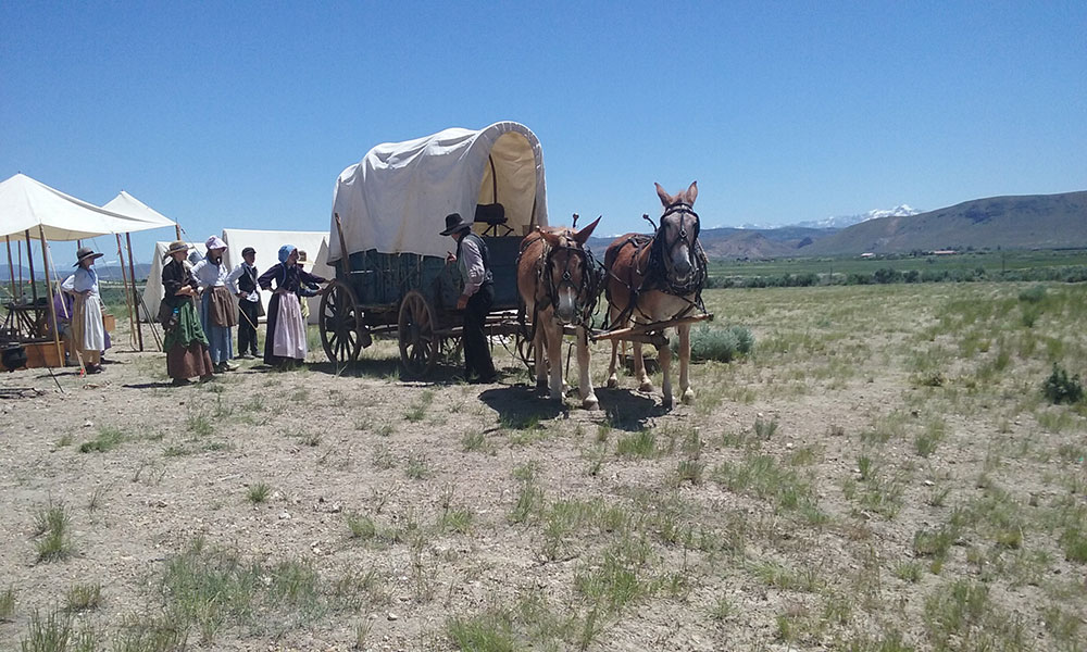 Wagons, Mules and Kids